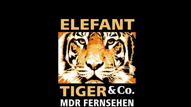 Zattoo Elefant Tiger Co Geschichten Aus Dem Leipziger Zoo